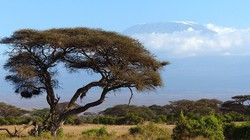 pic_Tansania: Mountain Bike Tour um den Mt. Kilimanjaro